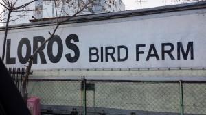愛知県東海市のオウム・インコ繁殖場「ロロスバードファーム」に行ってきた!